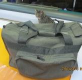 Сумки, рюкзаки, чехлы_30